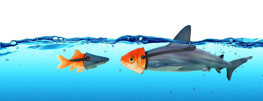 Petits poissons défiant les gros poissons